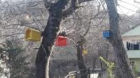 Cenaze Tabutları, Kuş Yuvasına Dönüştü