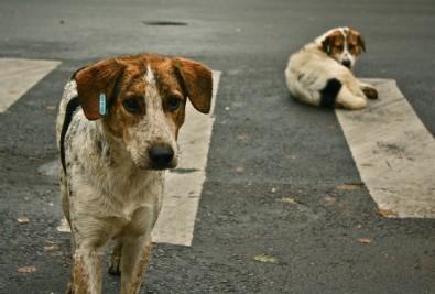 Hayvan haklarıyla ilgili kritik düzenleme hazır! İşte sokağa bırakma cezası