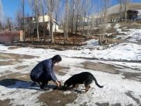 Demirözü'nde Sokak Hayvanları Unutulmadı