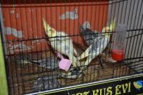 Pandemi Sinop'ta Kuş Satışlarını Arttırdı