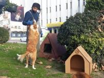 Sinop'ta Sokak Hayvanları Bu Kış Üşümeyecek