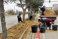 Karaman'da Budanan Ağaçlar Gübre Olarak Kullanılıyor
