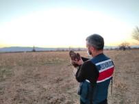 Karaman'da Yaralı Şahin Koruma Altına Alındı