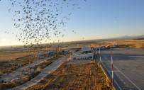 Şırnak Şerafettin Elçi Havalimanında Bu Yılın İlk 9 Ayında 250 Bin Yolcu Taşındı