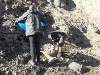 Tunceli'de 8 Yaban Keçisi Telef Oldu, İnceleme Başlatıldı