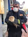 Sinop'ta Bacada Mahsur Kalan Baykuş Kurtarıldı