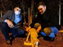 Osmancık'ta Sokak Hayvanları İçin Kampanya Başlatıldı