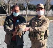 Yaralı, Doğan Kuşu Tedavi Altına Alındı