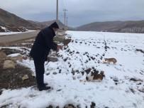 Bayburt'ta Sokak Hayvanları İçin Yiyecek Bırakıldı