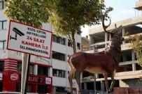 CHP'li Bolu Belediyesi'nin geyik heykellerine kameralı takip