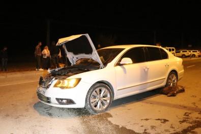 Agri'da Otomobil Sürüye Çarpti, 6 Keçi Telef Oldu