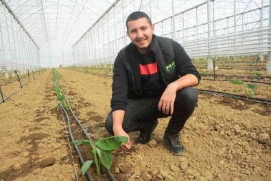 (Özel) Balikesir Muz Üretimi Ile Antalya Ve Mersin'e Rakip Olacak