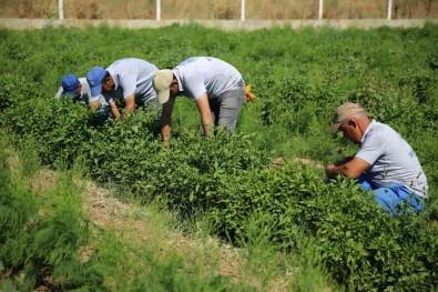 Posaci'dan Çiftçilere Müjde