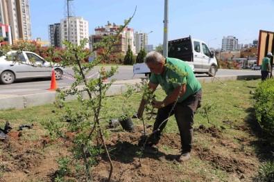 Toroslar Belediyesi, Ilçenin Çiçek Ve Bitkilerini Kendi Serasinda Yetistiriyor