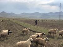 Kars'ta Sicak Hava Küçükbas Hayvanlara Yaradi