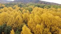 Tunceli Sonbaharda Görsel Sölen Sunuyor