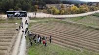 Yerli Ve Yabanci Turistlerin Gözdesi 'Safran Tarlalari' Ilçe Turizmini Hareketlendirdi