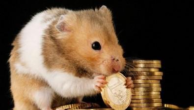 Hamster Coin Nedir? Hamster Coin nasıl alınır?