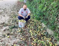 Organik Elmalar Pekmeze Dönüsüyor