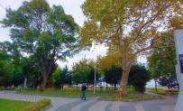Tekirdag'da Iki Devlet Gören Tabiatin Sessiz Taniklari