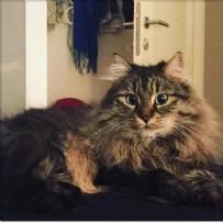 Kedilerin velayeti davasında emsal karar! 'Piraye' ve 'Cingöz' için bilirkişi raporu alındı