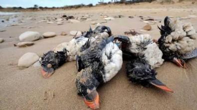 Gökyüzünden ölü kuşlar yağdı! Korkutan uyarı: Türkiye'ye hastalık taşıyabilir