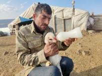 Ağzı Kulağına Kadar Açık Kuzu Doğdu, Biberonla Beslenmeye Başladı