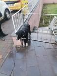 Demir Parmaklıklı Kapıya Sıkışan Köpeği Ekipleri Kurtardı
