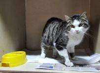 Odunpazarı Kedilerde FİP Hastalığına Karşı Uyardı