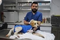 Dakikalarla Yarıştılar Yaralı Köpeği Hayatta Tuttular