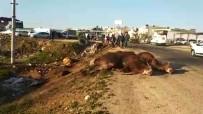 Şanlıurfa'da Tır Şarampole Devrildi, Hayvanlar Telef Oldu