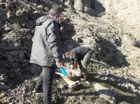 Tunceli'de 7 Yaban Keçisi Daha Ölü Bulundu