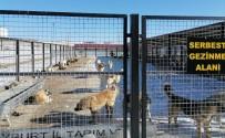 Bayburt Belediyesi'nden Sokak Hayvanlarıyla İlgili Açıklama