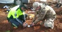 Feci Kazada Minibüsün Altında Kalan Güvercinleri Güvenlik Güçleri Kurtardı