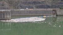 Muratlı Ve Borçka Baraj Göllerindeki Çöpler Kötü Görüntü Oluşturuyor