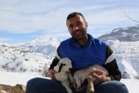 Şehir Hayatı Sıkıcı Geldi, Köyüne Yerleşip Hayvancılık Yapmaya Başladı