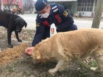 Bucak'ta Jandarma Ekipleri, Sokak Hayvanlarını Unutmadı