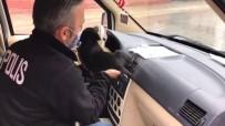 Donmak Üzere Olan Yavru Köpeğe Polis Şefkati