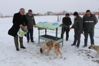 Amasya'da Kuşlar Ve Sokak Hayvanları İçin Yiyecek Bırakıldı