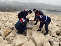 Soğuktan Donmak Üzere Olan Yaralı Pelikanı Jandarma Kurtardı