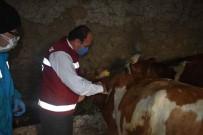 Bayburt'ta 80 Bin Baş Hayvana Şap Aşısı Vurularak 18 Bin Hayvana Küpe Takılacak