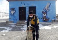 Gözleri Görmeyen Köpeğe Nevşehir Belediyesi Sahip Çıktı