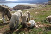 Tunceli'de Sokak Hayvanlarına Vefa