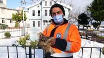 Kastamonu'da Donmak Üzereyken Bulunan Baykuş Tedavi Altına Alındı