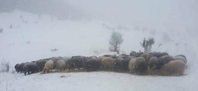Artvin'de Karda Mahsur Kalan Çobanlar Ve Sürülerini Kurtarıldı
