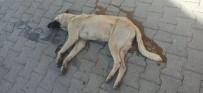 Nevşehir'deki Köpek Katili Yakalandı