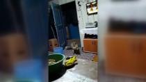 Gümüşhane'de Köylüler, Aç Kalıp Evlere Giren Tilkiyi Elleriyle Besliyor