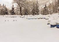 Arı Kovanları Kar Altında
