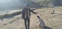 Çalınan Köpeğini Bulup Getirene 20 Bin Lira Ödül Verecek