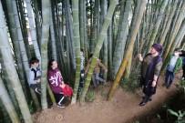 Dedesi Gürcistan'dan 25 Yıl Önce Getirdiği 4 Bambu Fidanını Evinin Bahçesine Dikti, İlgi Odağı Oldu